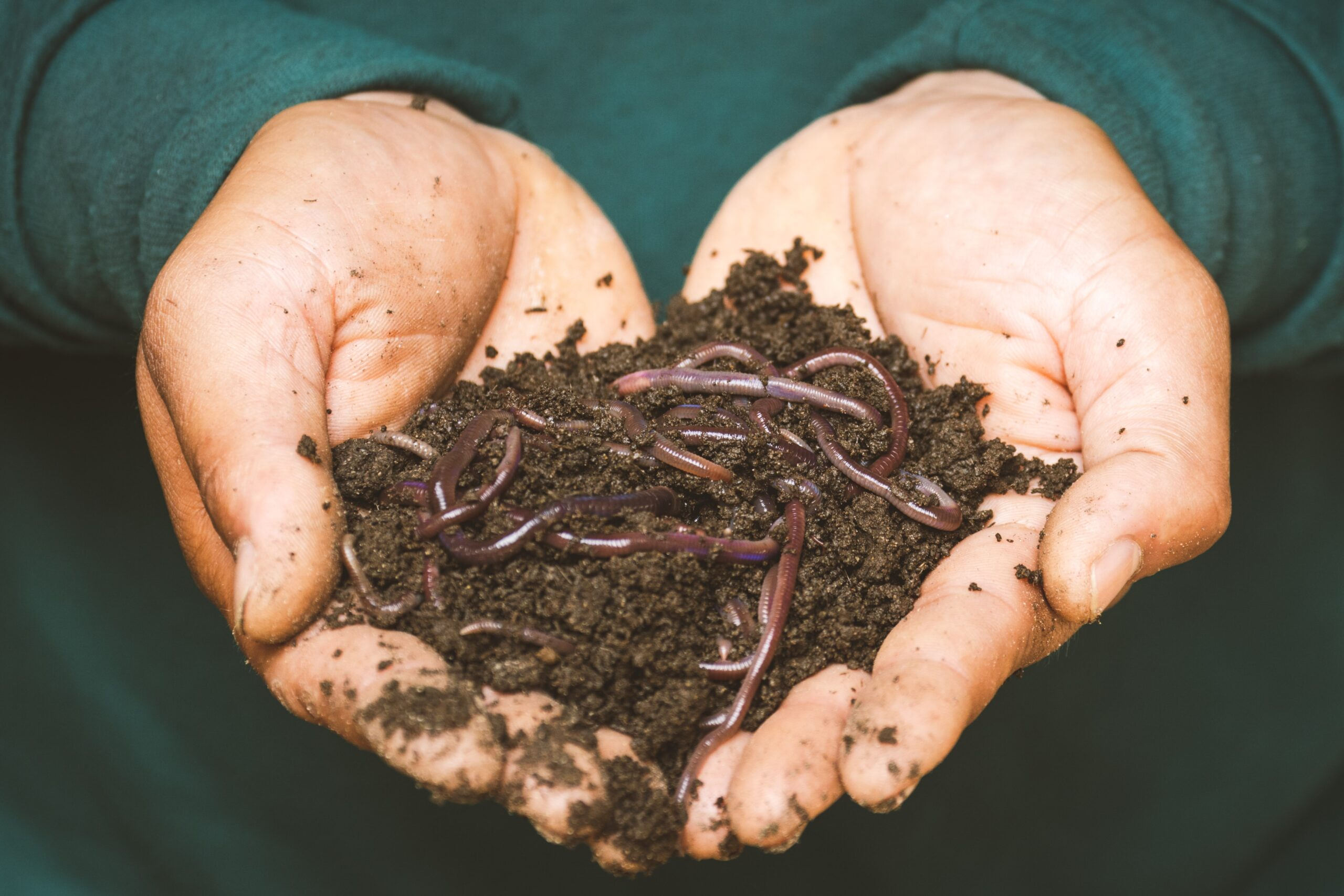 ow to Catch Worms for Fishing Bait